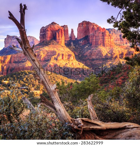 Cathedral Rock in Sedona, Arizona in the evening light with an old tree in the foreground - stock photo