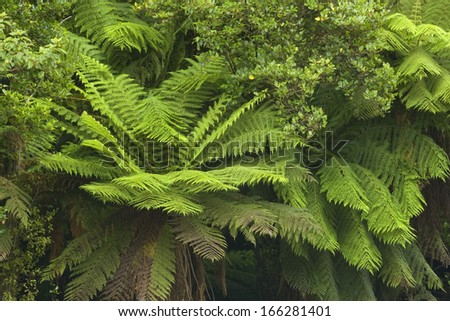 Catlins, Southland, Rainforest, river flowing through lush temperate rainforest with different kinds of ferns and trees, New Zealand