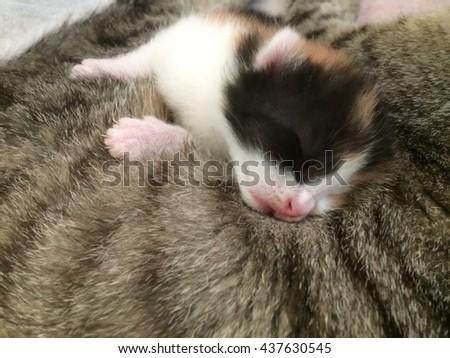 Cats - stock photo