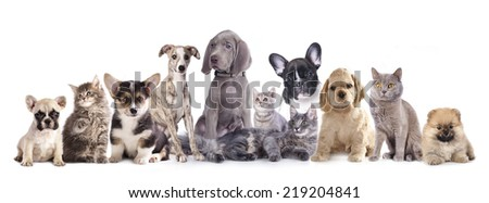 Cats and dogs. - stock photo