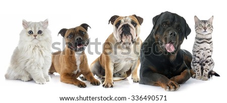 cats and dogs in front of white background - stock photo