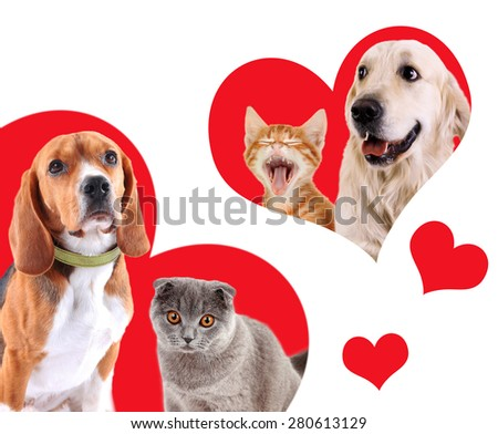 Cats and dogs in red hearts isolated on white - stock photo