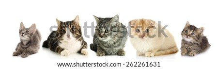 Cats and kittens isolated on white - stock photo