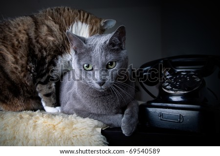 Cats and old black manual phone with dial plate - stock photo