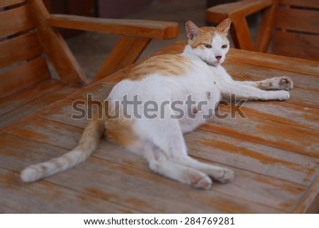 cats Belly - stock photo