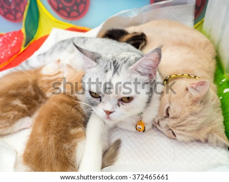 Cats breastfeeding the kittens, select focus