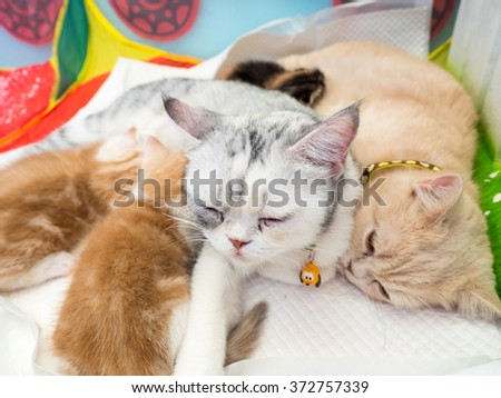Cats breastfeeding the kittens, select focus - stock photo