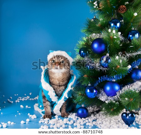 Cats celebrate the new year - stock photo