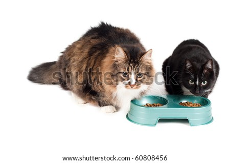 Cats eating - stock photo