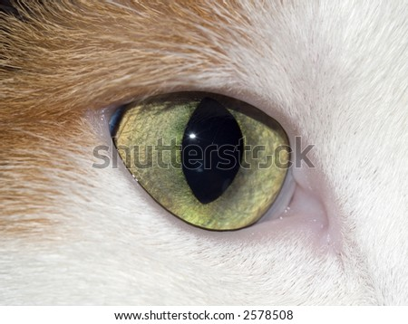 cats eye - stock photo
