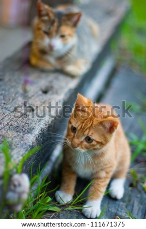 Cats game - stock photo