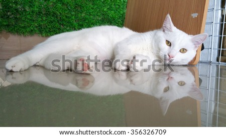Cats in my house, it was looking at you . - stock photo