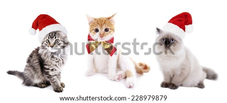 Cats in Santa Claus hat isolated on white - stock photo