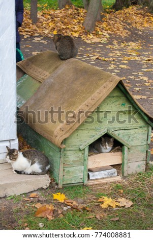 Cats in their house in the park