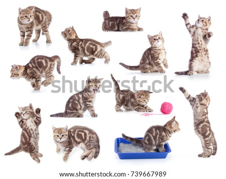 Cats isolated set