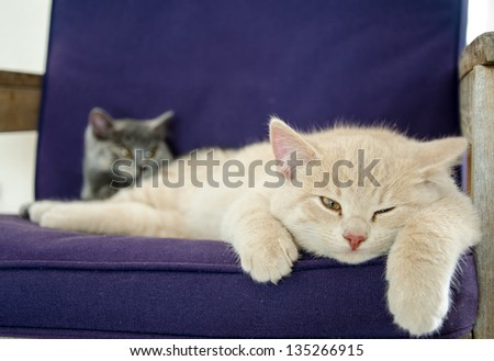 cats laying on sofa - stock photo