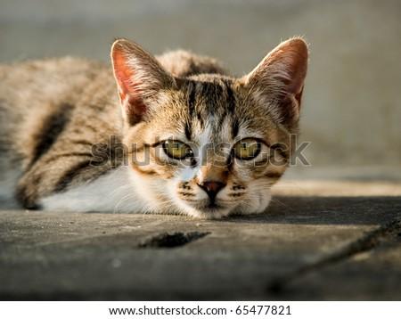 Cats Looking At Camera - stock photo