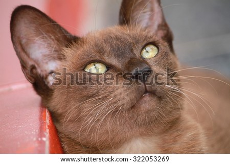 Cats Looking cute and made gestures - stock photo