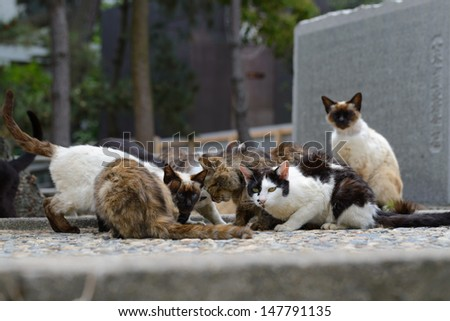cats meeting. megishima. japan - stock photo