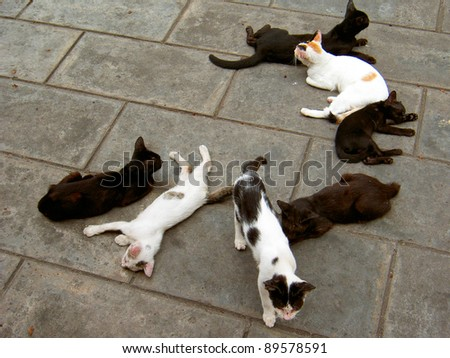 Cats on a street in Bangkok, Thailand. - stock photo