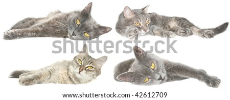 Cats on a white background.