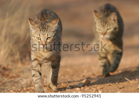 Cats on the hunt