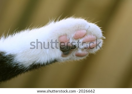 Cats paw - stock photo