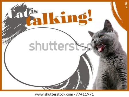 Cats posters Samples - stock photo