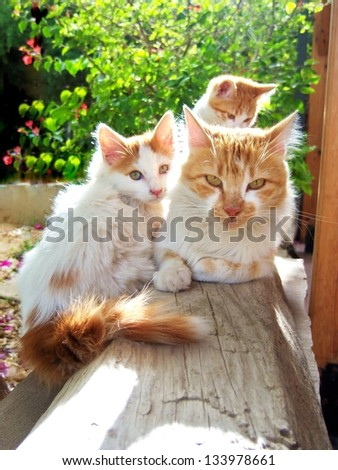 cats resting on wooden board - stock photo