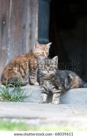 Cats sitting in front of barn door - stock photo