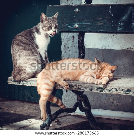 Cats sleeping. - stock photo