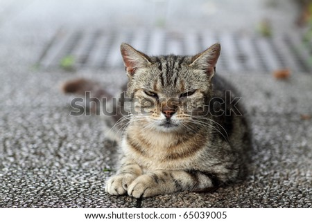 Cats stare - stock photo
