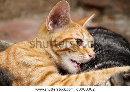 cats together - stock photo