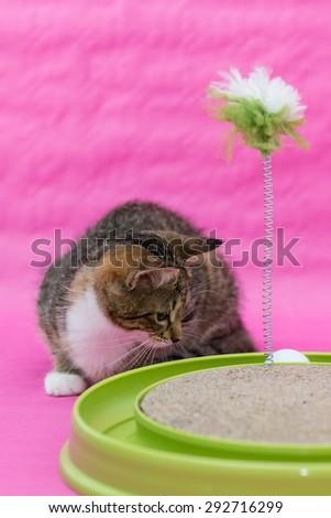 cats toys - stock photo