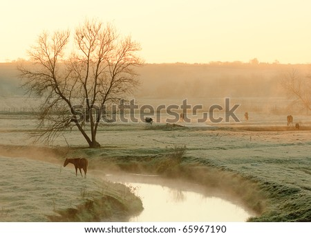 Cattle and horses grazing along a stream in a very rural autumn scene.