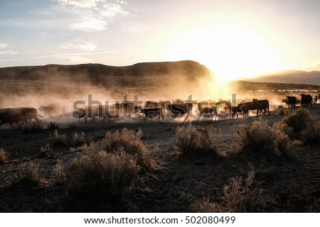 Cattle Drive Stock Images Royalty Free Images Amp Vectors