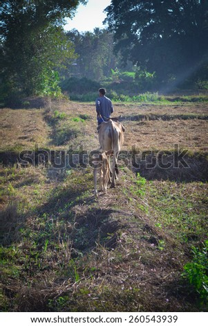 Cattle farmer in the morning - stock photo