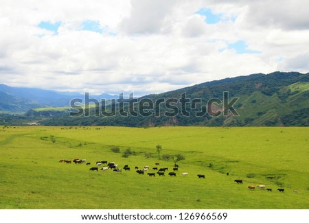 Cattle grazing on a green field near Salta, Argentina - stock photo