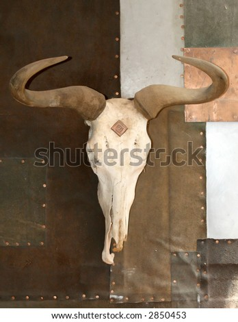 cattle horns on a bleached white skull haning on a wall - stock photo