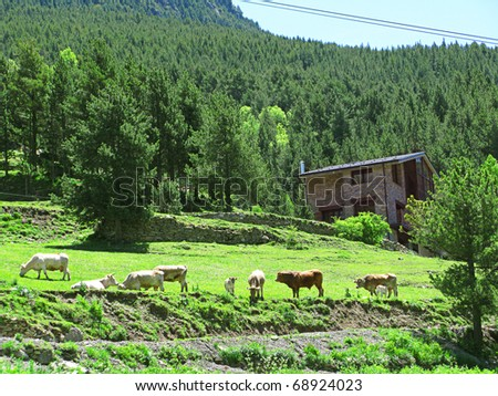 Cattle in high mountain and stone house - stock photo