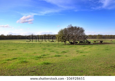 Cattle in the farm in Mississippi state - stock photo