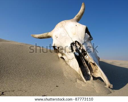 cow skull and desert - photo #8