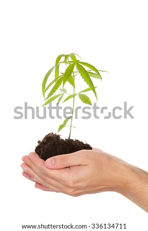 Caucasian handsome man holding young cannabis plant with soil in his hand isolated on white background. Drug business. - stock photo