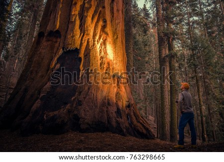 Caucasian Hiker with Flashlight Exploring Giant Sequoias Forest in California Sequoia and Kings Canyon National Parks.