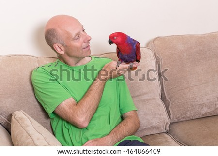 Caucasian man stroking a tame red Eclectus parrot sat on his hand