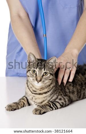 Caucasian woman Veterinarian examining a kitten - stock photo
