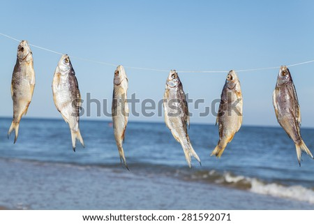Caught fish hanging and drying on a rope on the beach at summer day - stock photo