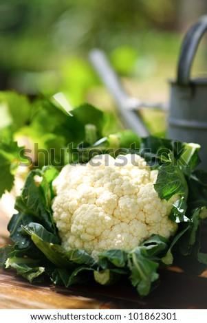Cauliflower - stock photo