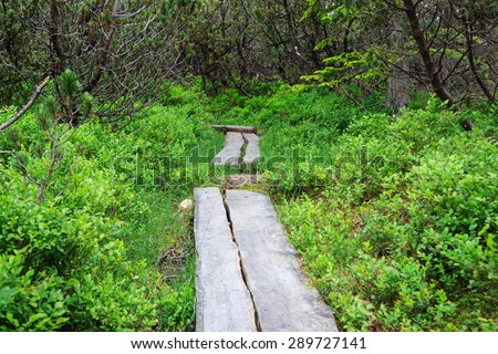 Causeway in the swamp. - stock photo