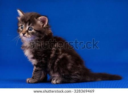 Cautious little kitten over blue background - stock photo